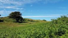 summer curracloe camp site wexford